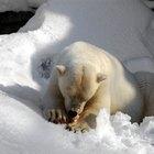 Los efectos del derretimiento de los casquetes polares