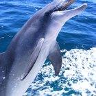 Hábitat del delfín rosado de río