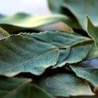 ¿Porqué es importante la clorofila para las plantas?