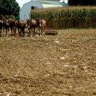 Ideas para tesis sobre agricultura