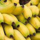 ¿Qué alimentos son beta bloqueantes naturales?