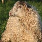 Cómo estimar la cantidad de lana para un proyecto de crochet