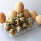 Alergias al huevo en adultos