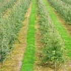 Cuáles son los peligros de los pesticidas y herbicidas