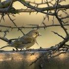 Imágenes y tipos de pájaros