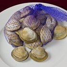 How to Purge Sand Out of Clams With Cornmeal
