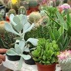 Cómo hacer plantas miniatura