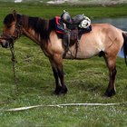 ¿Cómo construir un cepo para herrar caballos?