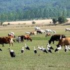 Cómo prevenir la extinción de los animales