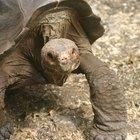 Resorts Todo Incluido en las Islas Galápagos