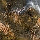 Porcentaje de animales en peligro de extinción en los continentes