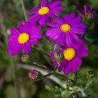 Cuáles son las funciones de flores y plantas