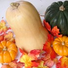 The History of Butternut Squash