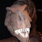 Cómo hacer un modelo de dinosaurio grande