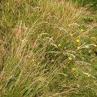 ¿Qué tipos de árboles se encuentran en los biomas de pastizales?