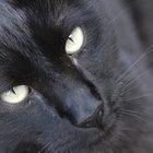 Los lunares y las marcas en la piel de los gatos