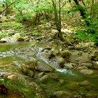 Animales y plantas en las montañas de Georgia