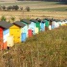 Cómo construir una trampa para un enjambre de abejas