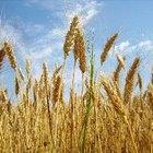 ¿Quién descubrió los pesticidas y los fertilizantes?