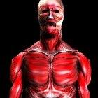 ¿Qué suplementos puedes consumir para tratar la inflamación muscular?