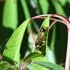 Por qué las avispas son importantes para el medio ambiente