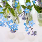 Proyectos de ciencias sobre cómo las flores consumen agua