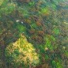 Ciclo de vida de las algas