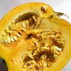 Cómo deshacerse de parásitos usando semillas de calabaza y miel
