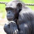 Reino Animalia: phyla y clases