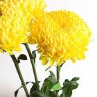 Cómo arreglar los arreglos florales para que las flores no se muevan