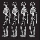 ¿Cuáles son los principales órganos del sistema esquelético?