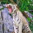 Animales herbívoros, omnívoros y carnívoros