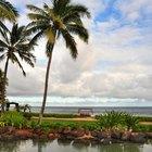 Cúal es el mejor mes para viajar a Hawai
