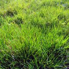 Qué hacen las hojas verdes en una planta