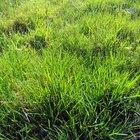 ¿Dónde se realiza la fotosíntesis?