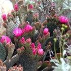 Plantas de flor con espinas