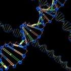 ¿Cuáles son las cuatro bases nitrogenadas del ADN?