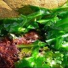 ¿Qué organismos consumen algas marinas?