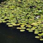 Plantas acuáticas y tipos