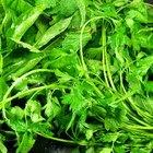 Alternativas herbales a la prednisona