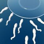 Cómo hacer más esperma fértil