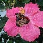 Aprender sobre mariposas para niños
