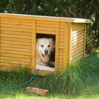 How to Make Money Building Dog Houses