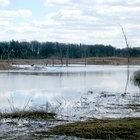 Problemas ambientales asociados con humedales continentales y costeros