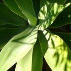 ¿Por qué es necesario el sol para las plantas?