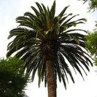 Hacer una palmera artificial