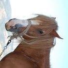 Cómo puedo hacer una máscara que parezca un caballo