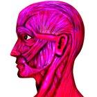 Definición del sistema muscular