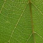 La definición de células parenquimales en las plantas
