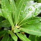 ¿Qué estructura en una célula vegetal es verde?